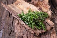 erbe dei rosmarini ed erbe medicinali Erbe curative organiche fresco Immagine Stock Libera da Diritti