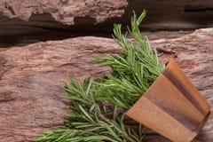 erbe dei rosmarini ed erbe medicinali Erbe curative organiche fresco Fotografia Stock