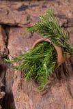 erbe dei rosmarini ed erbe medicinali Erbe curative organiche fresco Immagini Stock