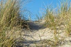 Erbe della duna dettagliatamente Immagini Stock Libere da Diritti