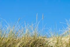 Erbe della duna dettagliatamente Fotografia Stock Libera da Diritti