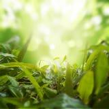 Erbe dense con la priorità bassa verde della natura Fotografie Stock