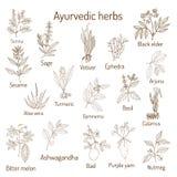 Erbe di Ayurvedic, insieme botanico naturale Fotografie Stock Libere da Diritti