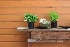 erbe di Ri-impregnazione su una vecchia tavola del giardino in primavera immagine stock