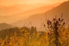 Erbe differenti della montagna ed il tramonto Fotografia Stock Libera da Diritti