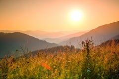 Erbe differenti della montagna nei raggi del tramonto Fotografia Stock