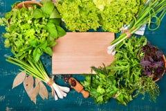 Erbe differenti insalata, aneto, prezzemolo, coriandolo su un fondo di legno Posto per testo Immagine Stock