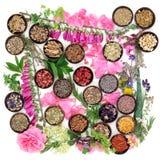 Erbe e fiori medicinali Fotografie Stock