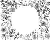 Erbe e floweres selvaggi Metta dei fiori della botanica royalty illustrazione gratis