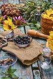 Erbe e piante medicinali Fotografia Stock