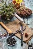 Erbe e piante medicinali Fotografia Stock Libera da Diritti