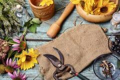 Erbe e piante medicinali Immagine Stock