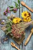 Erbe e piante medicinali Immagini Stock