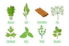 Erbe e spezie Condimento verde organico Stile piano del fumetto Vettore Fotografia Stock