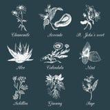 Erbe e spezie impostate Officinalis disegnati a mano, piante medicinali e cosmetiche Illustrazioni botaniche di vettore per le et Fotografia Stock Libera da Diritti