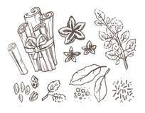 Erbe e spezie Insieme disegnato a mano dell'illustrazione di vettore Disegno inciso di sapore e del condimento di stile Annata bo royalty illustrazione gratis