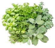 Erbe fresche Ingredienti di alimento Basilico, prezzemolo, rosmarino, salvia Immagini Stock