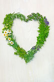 Erbe fresche nella forma del cuore di amore Immagine Stock