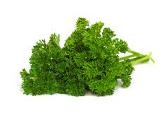 Erbe fresche - prezzemolo verde Fotografia Stock