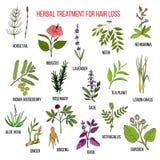 Erbe medicinali per il trattamento di perdita di capelli Fotografia Stock
