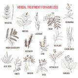 Erbe medicinali per il trattamento di perdita di capelli Immagine Stock