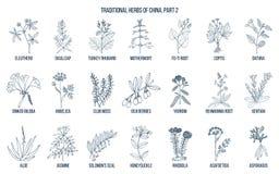 Erbe medicinali tradizionali cinesi Immagini Stock