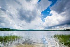 Erbe nel lago Massabesic, in castano dorato, New Hampshire Fotografia Stock