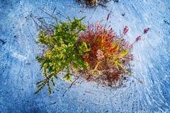 Erbe selvagge verdi con i fiori Immagine Stock Libera da Diritti