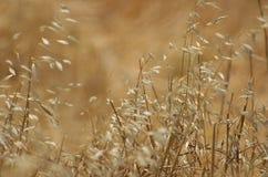 Erbe selvatiche fotografie stock