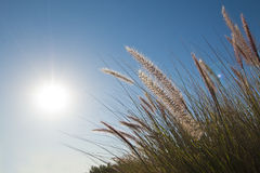 Erbe selvatiche nel sole di primo mattino Immagine Stock Libera da Diritti