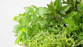 Erbe, spezie e fiori verdi stock footage