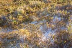 Erbe su suolo bianco Fotografie Stock