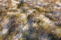 Erbe su suolo bianco Fotografia Stock