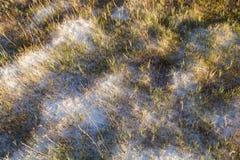 Erbe su suolo bianco Fotografie Stock Libere da Diritti