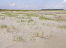 Erbe sulla spiaggia spaziosa di un'isola del Wadden Fotografia Stock