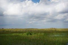 Erbe verdi alte contro un cielo blu con le nuvole in mezzo ai terreni paludosi di Florida Immagine Stock Libera da Diritti