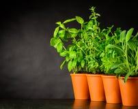 Erbe verdi che crescono con l'area di spazio della copia Fotografie Stock