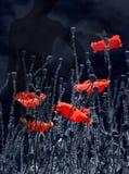 Erbjuda, lufta, den livgivande vallmo, rött modig lampa Poppy Rhapsody vektor illustrationer