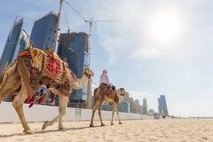 Erbjudande kamelritt för man på den Jumeirah stranden, Dubai, Förenade Arabemiraten Arkivbilder