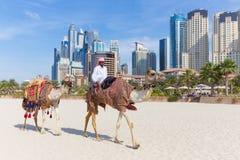 Erbjudande kamelritt för man på den Jumeirah stranden, Dubai, Förenade Arabemiraten Royaltyfri Bild