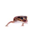 Erblassen Sie Griff-angebundenen Gecko, auf Weiß Lizenzfreie Stockfotos