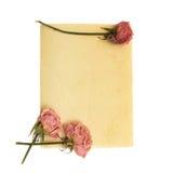 Erblassen Sie - rosafarbene Blume und Weinlesepapier Lizenzfreie Stockfotos