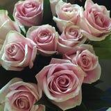 Erblassen Sie - rosafarbene Rosen Lizenzfreie Stockfotografie