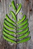 Erbsen werden in Form eines Baums auf einem hölzernen Hintergrund ausgebreitet Stockfotos