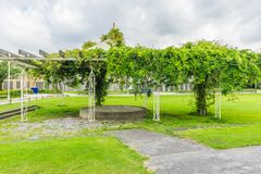 Erbsenbaum mit Bohnengehweg Lizenzfreies Stockfoto