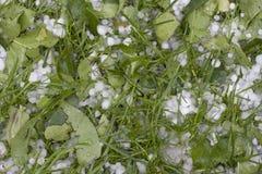 Erbsengröße Hailstones auf Gras Lizenzfreie Stockfotografie