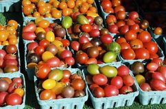 Erbstück Cherry Tomatoes Lizenzfreies Stockfoto