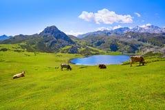 Ercina sjö på Picos de Europa i Asturias Spanien royaltyfri fotografi