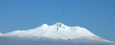 Erciyes Mount and Black headed gull Royalty Free Stock Photo