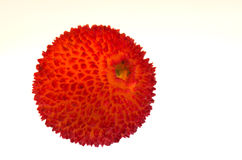 Erdbeerbaumfrucht - Arbutus unedo Stockfotos